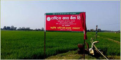 राष्ट्रिय खाद्य बैंक सञ्चालनमा